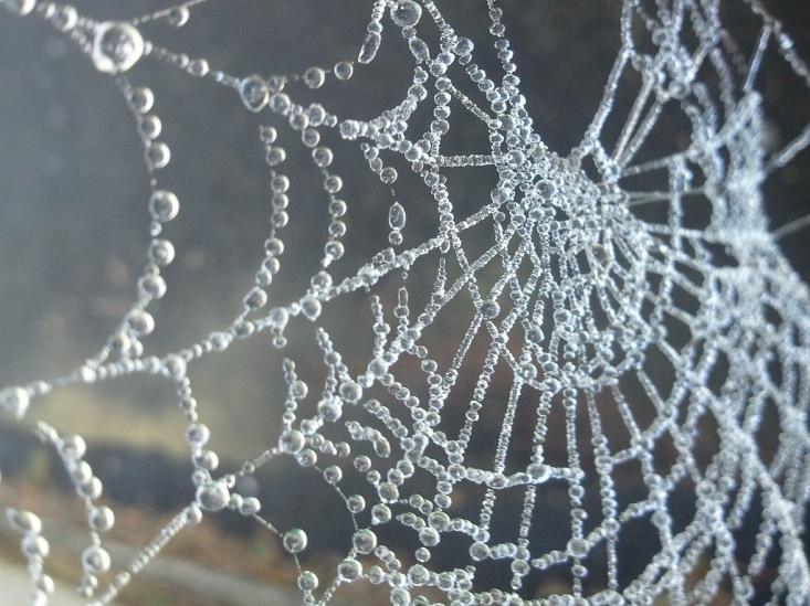 Frosty Web