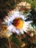 In Daisies