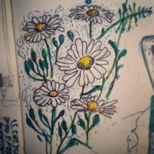 14/365. Daisies. Forgot to post this yesterday. Pencil, V-ball, coloured markers. Notebook: Zebulon. https://instagram.com/p/pjLrUNnyyz/