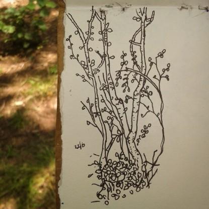15/365. Saplings growing out of broken tree stump. Leigh Woods. Pilot V-ball on paper. Notebook: Leonidas https://instagram.com/p/pi0fbJnyyh/