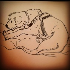 31/365. Rufus. Drawn in haste because he won't stop moving. Vball. Notebook: Ethel. https://instagram.com/p/qOwtp6Hy9U/