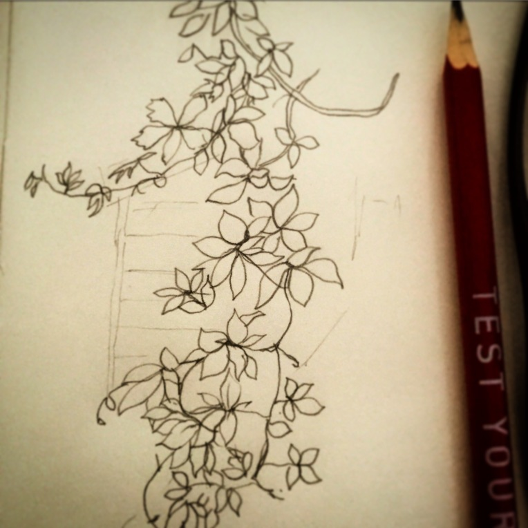 86/365  Hanging branch of Russian Vine with a hint of shed.   Pencil.   Notebook: Ethel