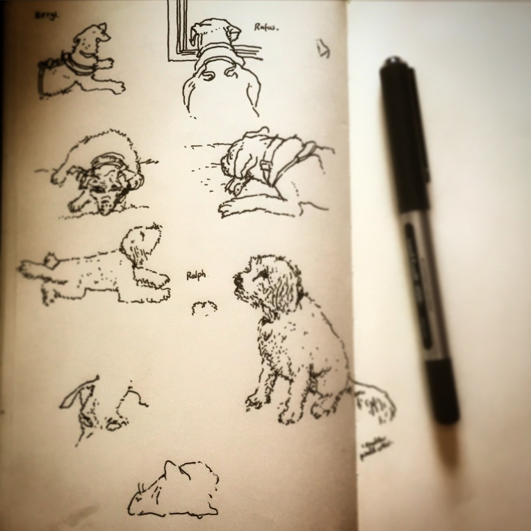 87/365  It was Three Dog Friday at BDH towers today. Beryl, Rufus and Ralph. Patterdale Terrier, Boxer and Cavalier Poodle Cross respectively.  Some cubist elements due to constant movement.  Uniball Micro.  Notebook: Ethel.