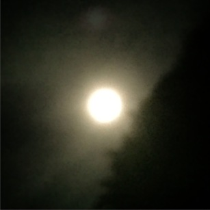 Supermoon over the front hedge.