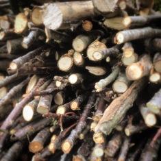 Winter Twigs