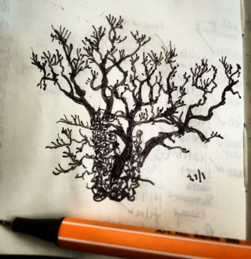 129/365 Very gnarly old tree. Black Stabilo point 88. 10 mins Notebook: Myrtle