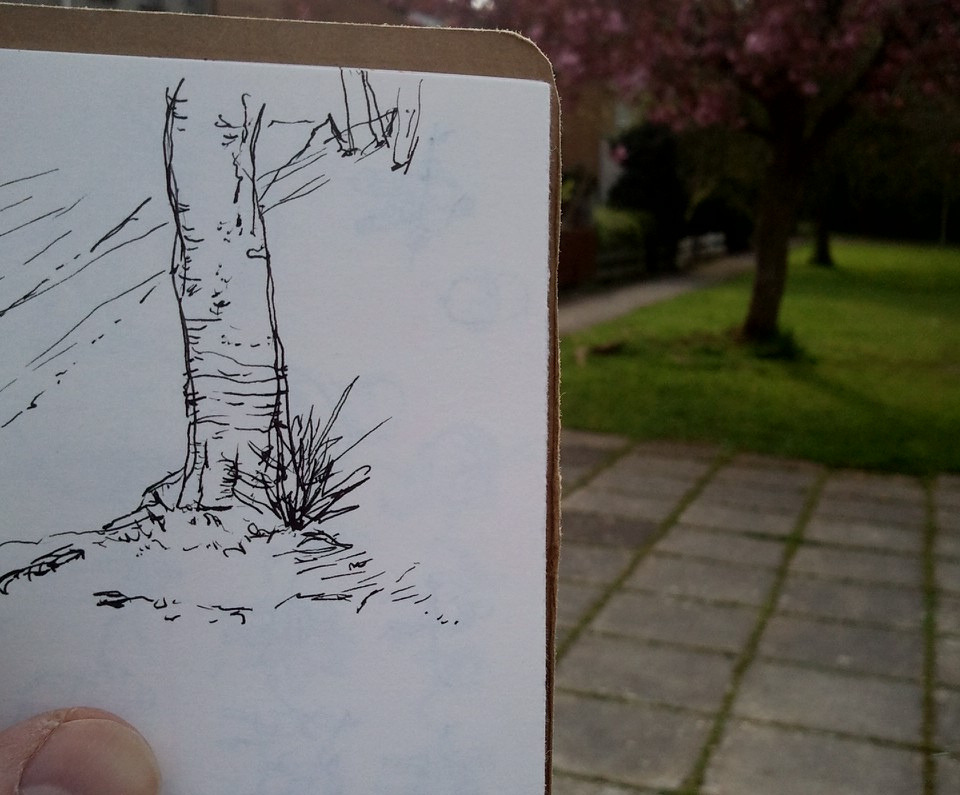 30 second tree trunk